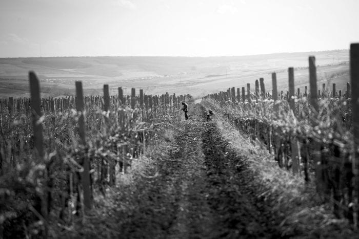 Vineyards black and white _ The history of Moldovan winemaking